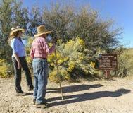 Un accoppiamento d'escursione sulle sorgenti del Murray - traccia del Clovis fotografia stock libera da diritti