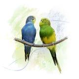 Un acquerello di due pappagalli di pappagallini ondulati Fotografia Stock Libera da Diritti