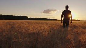 Un adolescente camina el campo de trigo en la puesta del sol Vídeo de la cámara lenta, visión trasera almacen de video