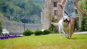 Un adolescente corre alrededor con su perro preferido en el parque almacen de metraje de vídeo