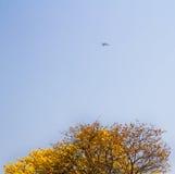 Un aereo Fotografie Stock Libere da Diritti