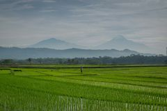 Un agricoltore Fotografia Stock