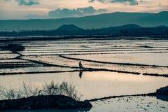 Un agricoltore ara il suo campo nel Vietnam Fotografia Stock Libera da Diritti