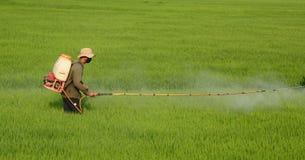 Un agricoltore che lavora al giacimento del riso nel delta del Mekong Fotografia Stock Libera da Diritti