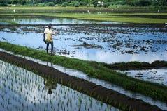 Un agricoltore che va per il lavoro in una terra di agricoltura Fotografia Stock Libera da Diritti