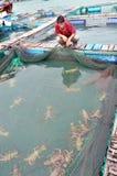 Un agricoltore con la sua aragosta che coltiva gabbia nella baia del Ro di Vung nel Vietnam Immagine Stock