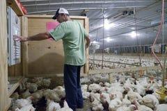 Un agricoltore del pollo Fotografia Stock Libera da Diritti