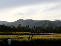 Un agricoltore locale fotografia stock