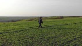 Un agricoltore maturo esamina un campo verde fresco dopo l'inverno, fa i piani per la raccolta e la preparazione per seminare video d archivio