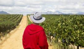 Un agricoltore nel rosso guarda verso una vigna verde Immagine Stock Libera da Diritti