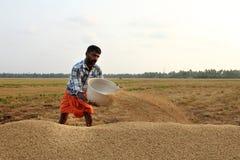 Un agricoltore non identificato si impegna nei lavori dopo il raccolto nelle risaie Immagine Stock