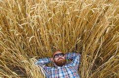 Un agricoltore o una bugia glabra dei pantaloni a vita bassa e si rilassa nel campo di grano Immagine Stock