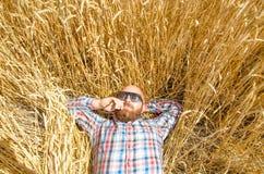 Un agricoltore o una bugia glabra dei pantaloni a vita bassa e si rilassa nel campo di grano Immagine Stock Libera da Diritti