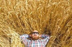 Un agricoltore o una bugia glabra dei pantaloni a vita bassa e si rilassa nel campo di grano Fotografia Stock Libera da Diritti