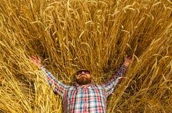 Un agricoltore o una bugia glabra dei pantaloni a vita bassa e si rilassa nel campo di grano Immagini Stock Libere da Diritti