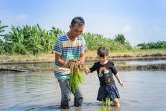 Un agricoltore sta insegnando ad un piccolo bambino a lavorare ad un campo di risaia Immagine Stock