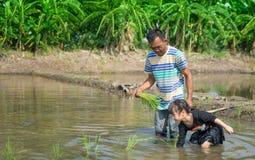 Un agricoltore sta insegnando ad un piccolo bambino a lavorare ad un campo di risaia Immagine Stock Libera da Diritti