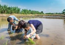 Un agricoltore sta insegnando ad un piccolo bambino a lavorare ad un campo di risaia Fotografie Stock