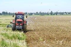 Un agricoltore su un trattore che ara la terra, circondata dagli uccelli Immagine Stock