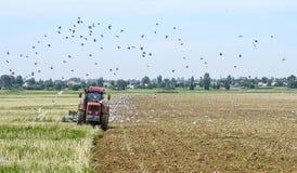 Un agricoltore su un trattore che ara la terra, circondata dagli uccelli Immagini Stock