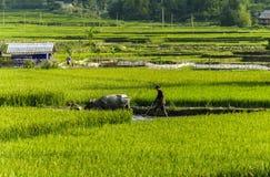 Un agricoltore sul giacimento del riso nel Vietnam Fotografie Stock Libere da Diritti
