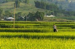 Un agricoltore sul giacimento del riso nel Vietnam Immagini Stock