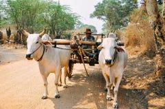 Un agricoltore in suo carrozzino in Bagan Immagine Stock