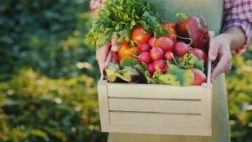 Un agricoltore tiene una scatola dei ravanelli e di altre verdure stagionali fotografie stock