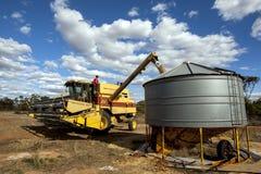Un agricoltore trasferisce un carico di grano dalla sua mietitrice in un silo del campo Fotografia Stock