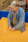 Un agricoltore in un rimorchio di trattore in pieno di cereale Fotografie Stock Libere da Diritti