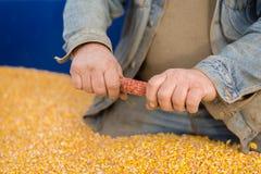 Un agricoltore in un rimorchio di trattore in pieno di cereale Immagine Stock Libera da Diritti