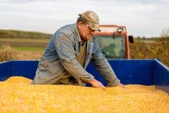 Un agricoltore in un rimorchio di trattore in pieno di cereale Immagine Stock