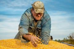 Un agricoltore in un rimorchio di trattore in pieno di cereale Fotografie Stock