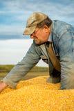 Un agricoltore in un rimorchio di trattore in pieno di cereale Immagini Stock Libere da Diritti