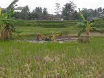 Un agriculteur image libre de droits