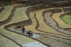 Un agriculteur avec le buffle d'eau sur le champ image libre de droits