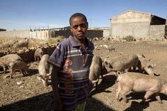 Un agriculteur de porc, Ethiopie Photo libre de droits