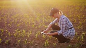 Un agriculteur féminin travaille dans le domaine au coucher du soleil Étudiant des pousses d'usine, les photographiant utilisant  Photo libre de droits