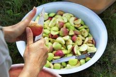 Un agriculteur nettoie les pommes en les coupant avec un couteau et en jetant les morceaux dans une cuvette d'émail photo stock