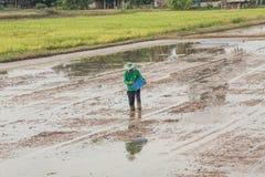 Un agriculteur sème des graines avec le seau Image libre de droits