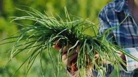 Un agriculteur tient une poignée d'oignons verts Légumes frais frais du champ images libres de droits