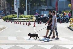 Un ajouter ? un chien croise un passage pour pi?tons photo libre de droits