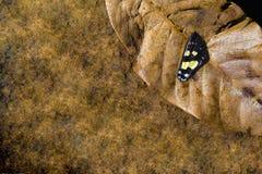 Un'ala della farfalla Immagini Stock Libere da Diritti