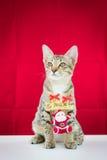 Un alambre Papá Noel del lazo del gato para la Navidad Imágenes de archivo libres de regalías