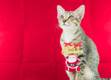 Un alambre Papá Noel del lazo del gato para la Navidad Foto de archivo