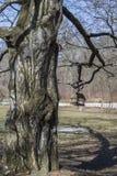 Un albero acceso dal sole e un alimentatore dell'uccello che pesa sui rami scuri contro fotografie stock
