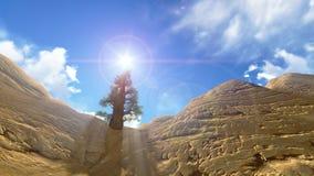Un albero al parco nazionale del Grand Canyon sulla s blu Fotografia Stock