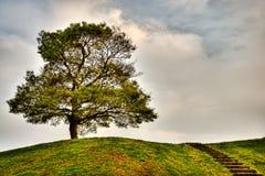 Un albero alla cima della collina Fotografia Stock