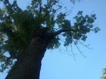 Un albero amichevole è là per me Immagine Stock Libera da Diritti
