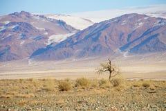 Un albero asciutto solo contro il contesto delle montagne di Altai in Mongolia Fotografia Stock